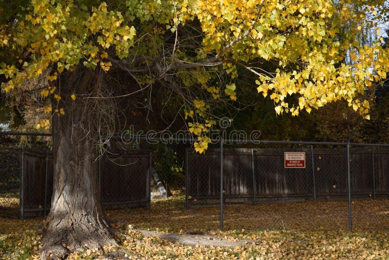 Деревья и загородки падения стоковое изображение rf