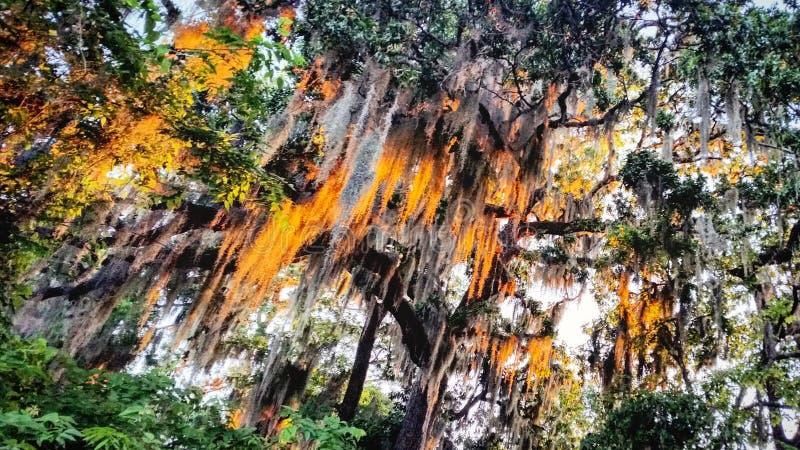 Деревья и заход солнца стоковые изображения rf