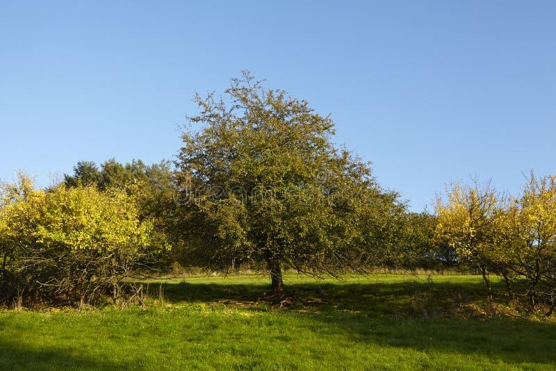 Деревья и кусты в падении стоковое изображение