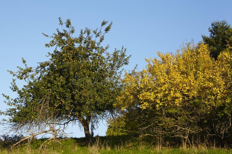 Деревья и кусты в падении стоковое фото rf