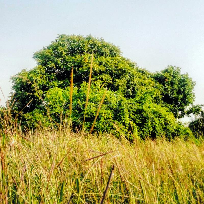Деревья и кусты стоковое фото