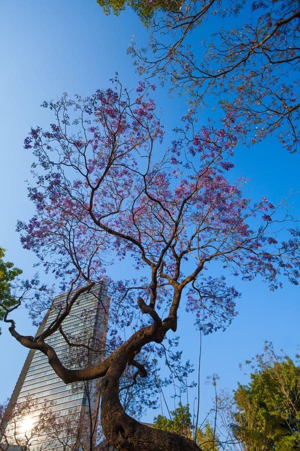 Деревья и небоскреб центрального парка Alameda фиолетовые стоковые изображения rf