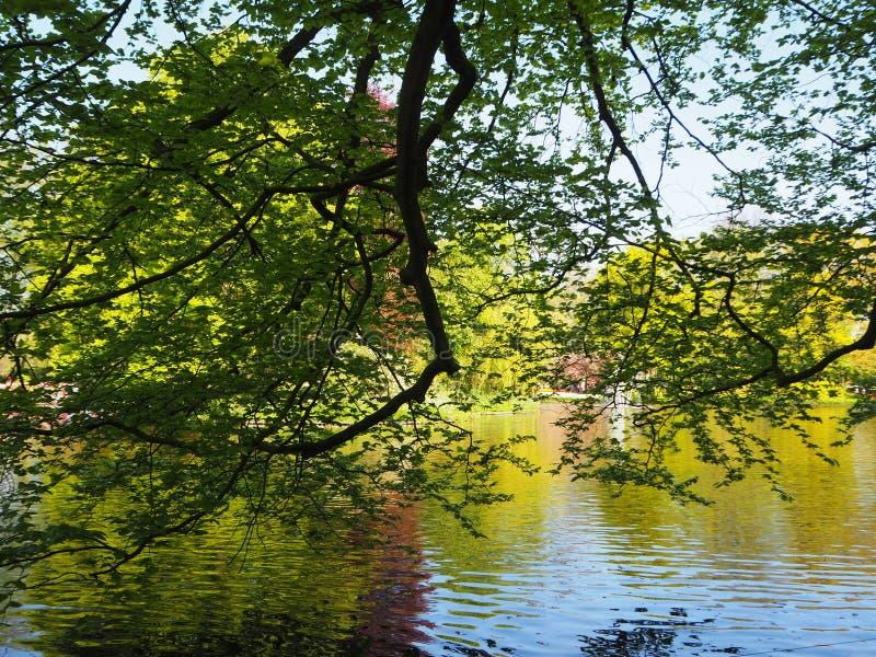 Деревья и пруд на Keukenhof Голландии стоковая фотография rf