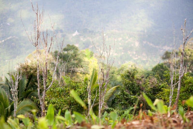 Деревья и трава в тропическом лесе стоковое фото rf