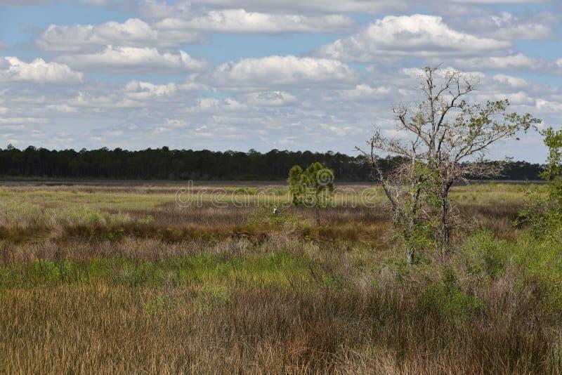 Деревья и травы в болоте соленой воды с голубым небом и облаками стоковые изображения rf