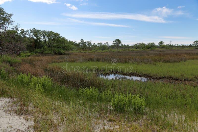 Деревья и травы в болоте соленой воды стоковые фото