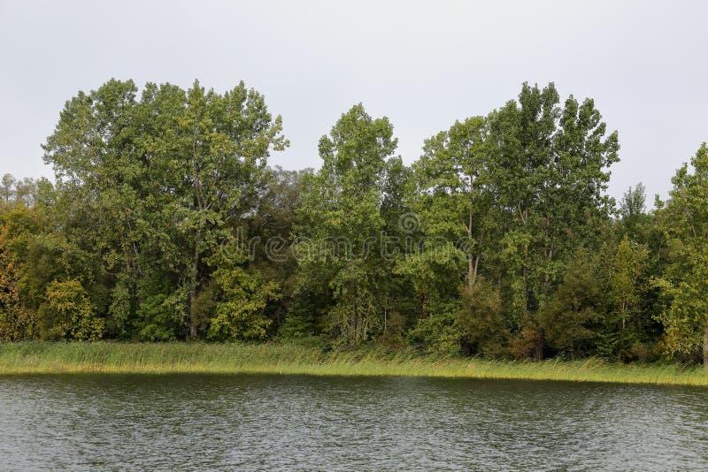Деревья и травы на береге залива вдоль Св. Лаврентия Ri стоковая фотография