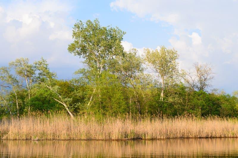 Деревья и тростники на озере, глубоком небе стоковое фото