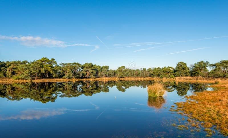 Деревья и тростники отразили в поверхности воды зеркала ровной стоковые изображения rf