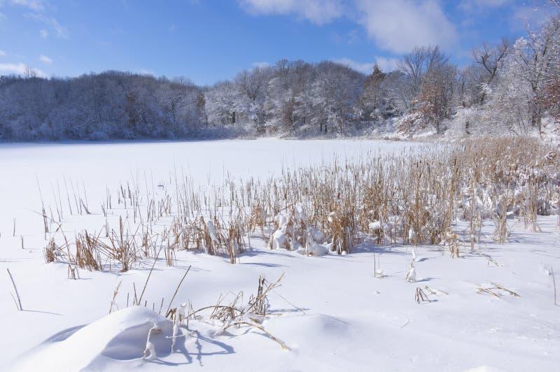 Деревья и тростники пруда парка Marthaler в зиме стоковое фото