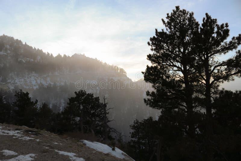 Деревья и туман стороны горы Вайоминга стоковая фотография rf