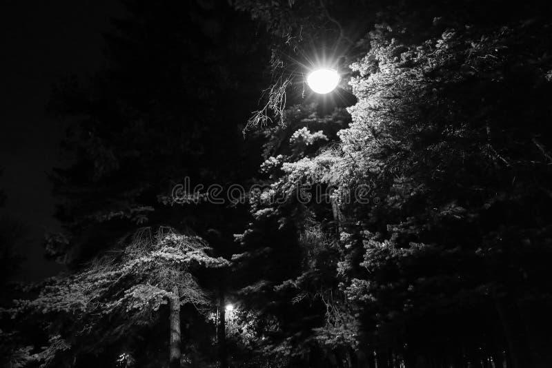 Деревья и уличные светы на ноче, черно-белой путь парка города стоковая фотография rf