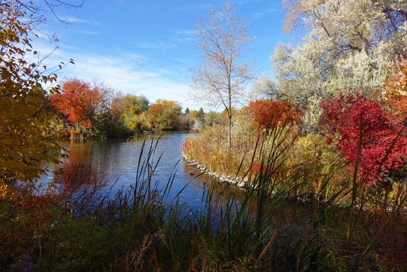 Деревья и waterscape осени стоковое изображение