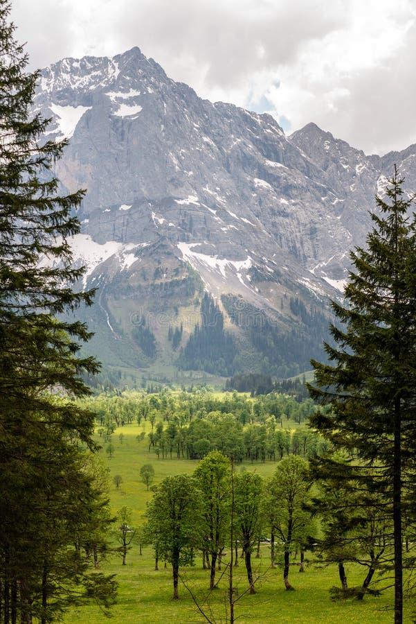Деревья клена перед горой стоковое фото rf