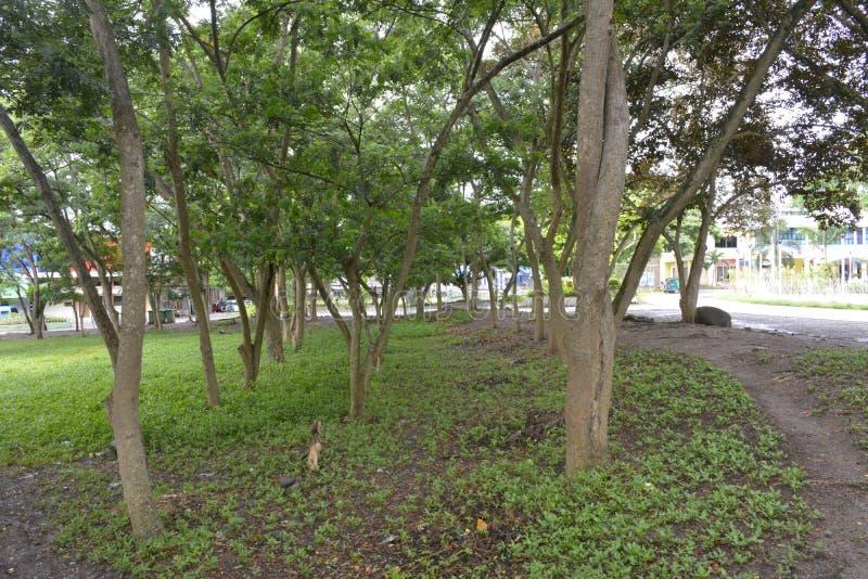 Деревья, который выросли в предпосылках муниципального Hall Matanao, Davao del Sur, Филиппин стоковые изображения