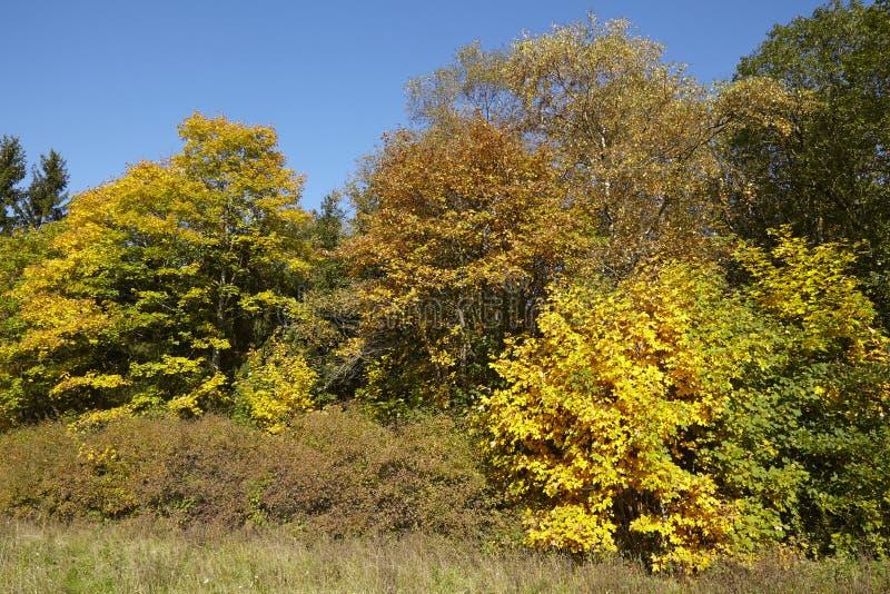 Деревья - край древесины на осени стоковые изображения