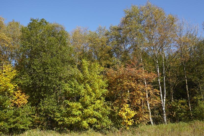 Деревья - край древесины на осени стоковые фотографии rf