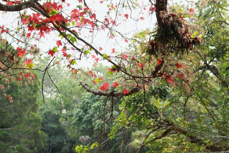 Деревья красного клена и зеленое общее дерево, оно делает хороший взгляд стоковое изображение rf