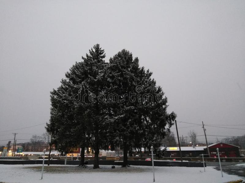 Деревья крышки снега стоковые фотографии rf