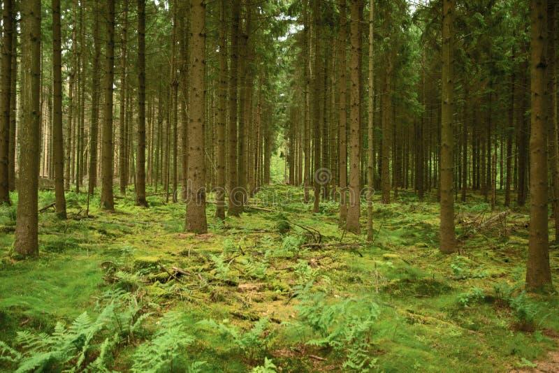 Деревья к безграничности стоковое фото