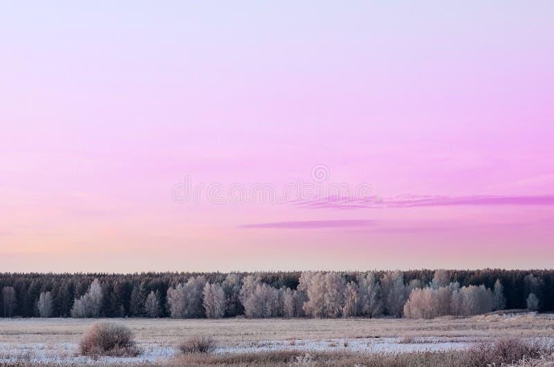 Деревья ландшафта зимы предусматриванные с заморозком стоковая фотография rf