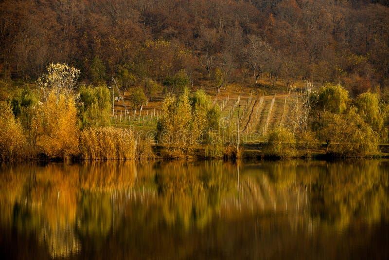 Деревья ландшафта осени красивые покрашенные над рекой, накаляя в солнечном свете чудесная живописная предпосылка Цвет в природе  стоковая фотография rf