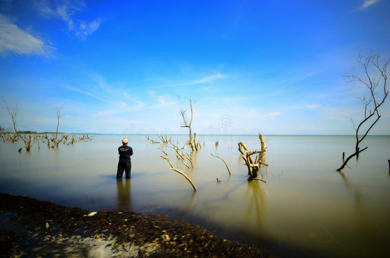 Деревья мангровы на пляже на заходе солнца или восходе солнца стоковая фотография rf