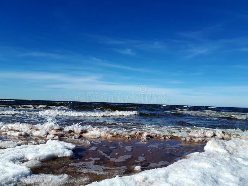 Деревья моря страны страны чудес зимы стоковая фотография
