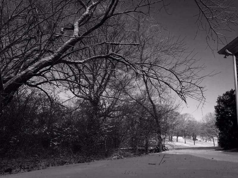 Деревья напудренные снегом стоковые изображения