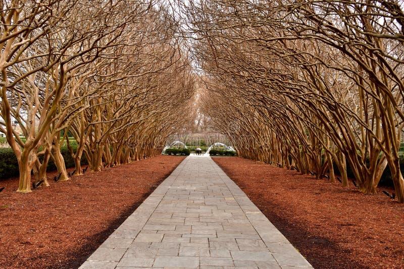 Деревья на вымощенной тропе стоковое изображение rf