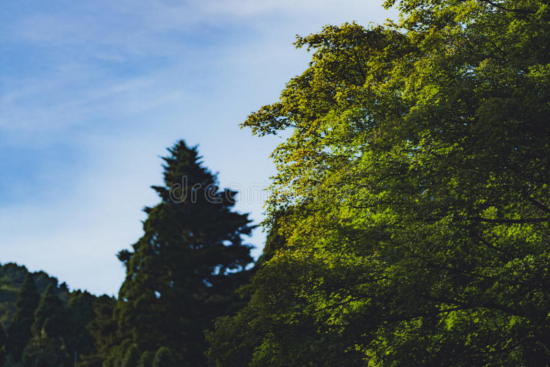 Деревья на горах LUSHAN стоковое фото