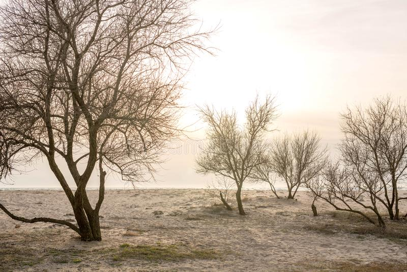 Деревья на заходе солнца морем в предыдущей весне стоковое изображение