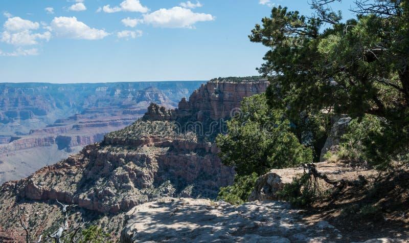 Деревья на краю скалы гранд-каньона, Аризоны стоковая фотография rf