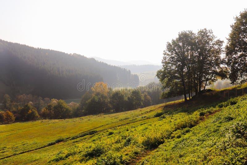 Деревья на ландшафте луга в предыдущей панораме осени стоковая фотография