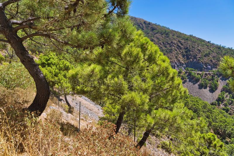 Деревья на наклоне горы против голубого неба стоковые изображения rf