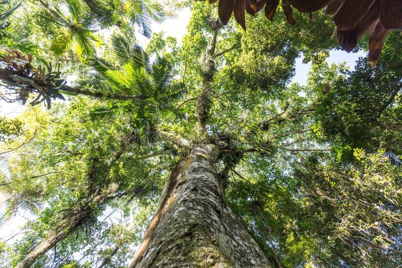 Деревья на парке Frantz Damm ботанического сада, Timbo Санта-Катарина стоковые изображения rf