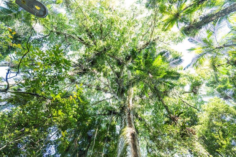 Деревья на парке Frantz Damm ботанического сада, Timbo Санта-Катарина стоковая фотография rf