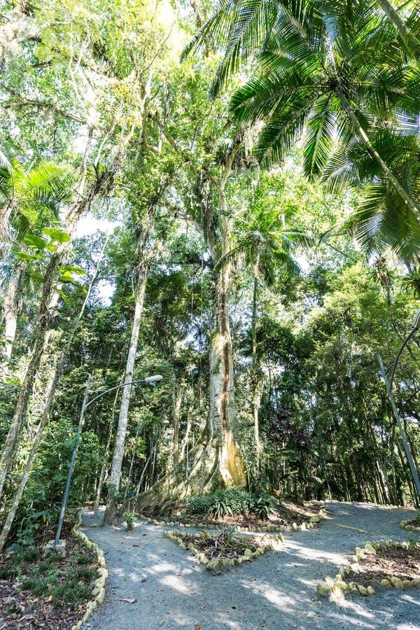 Деревья на парке Frantz Damm ботанического сада, Timbo Санта-Катарина стоковое фото