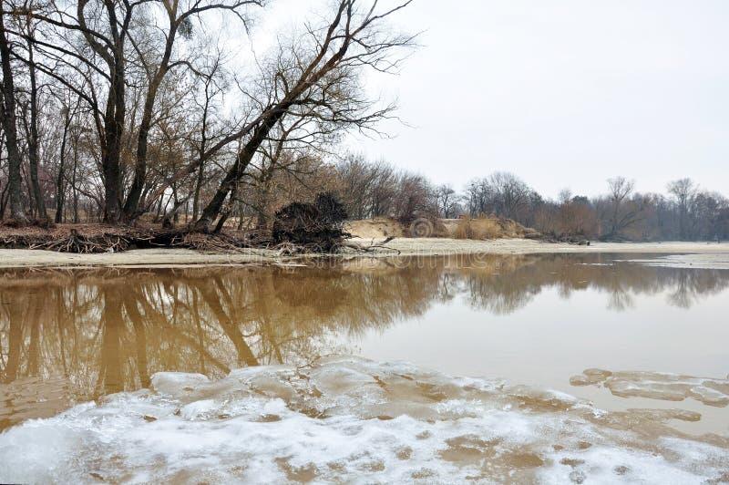 Деревья на песочном речном береге стоковая фотография rf