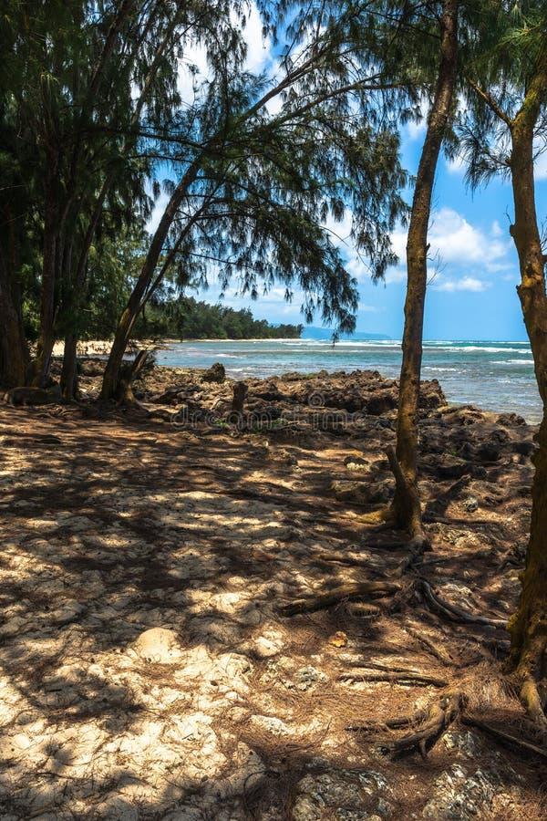 Деревья на пляже в побережье Kawela, Оаху, Гаваи стоковые фотографии rf