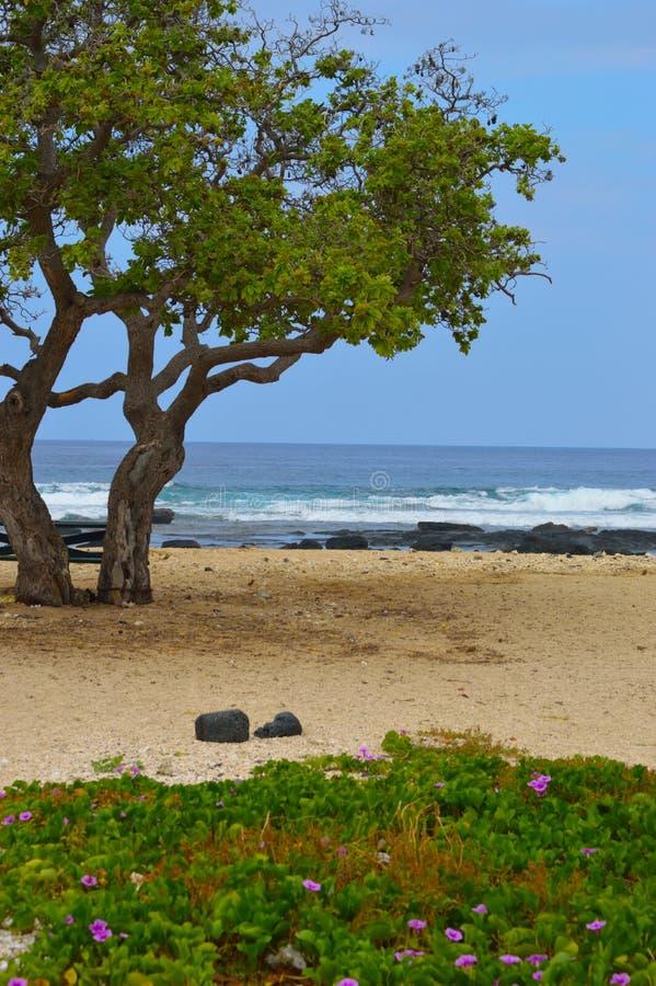 Деревья на пляже стоковое изображение rf