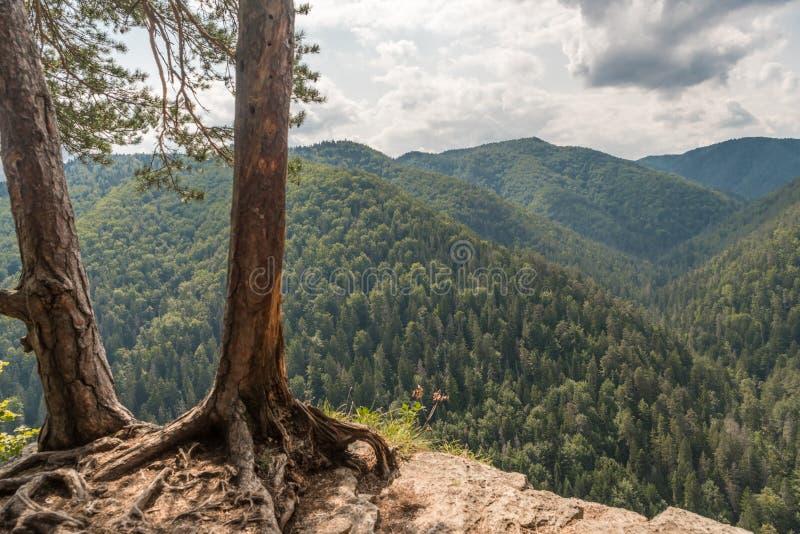 Деревья на скале стоковые изображения