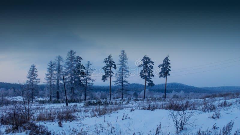 Деревья на снежном поле стоковое фото