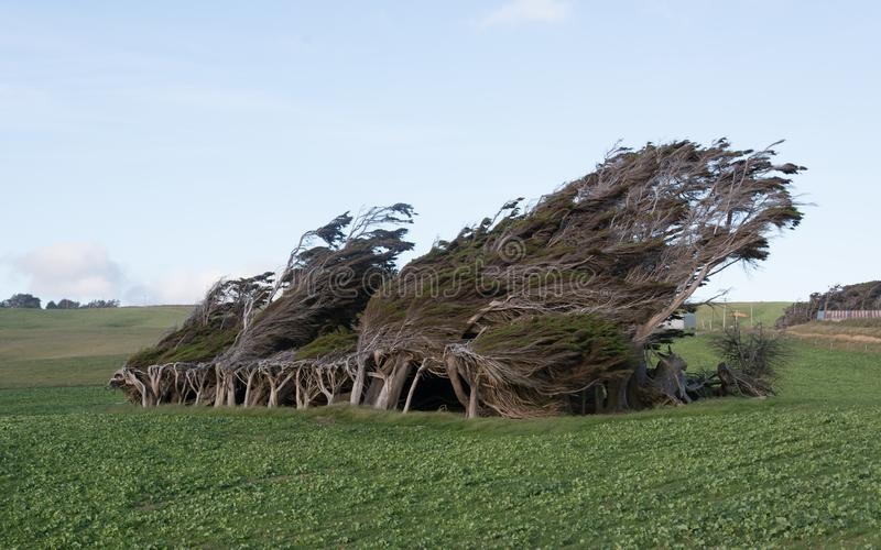 Деревья Новой Зеландии пункта наклона стоковая фотография