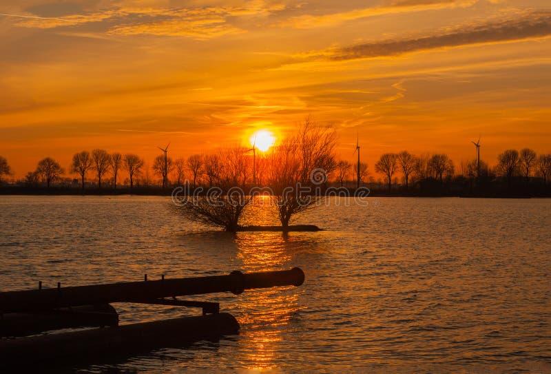 Деревья освещенные заходящим солнцем стоковое фото