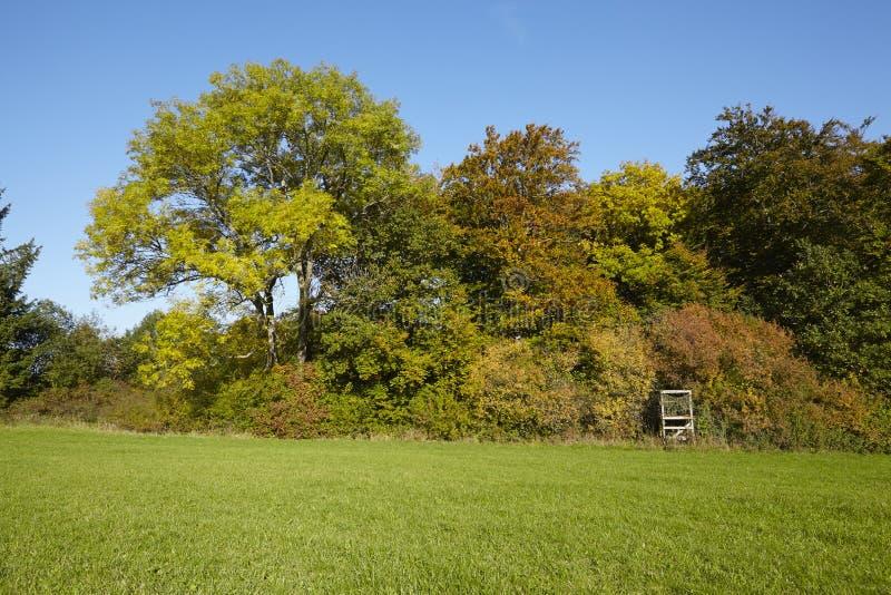 Деревья осени на крае луга стоковая фотография rf
