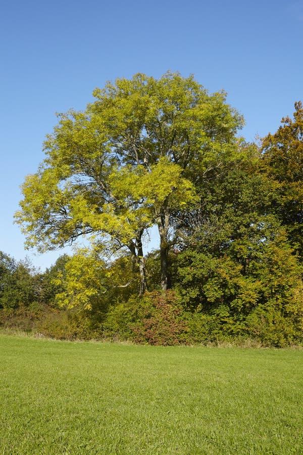 Деревья осени на крае луга стоковая фотография