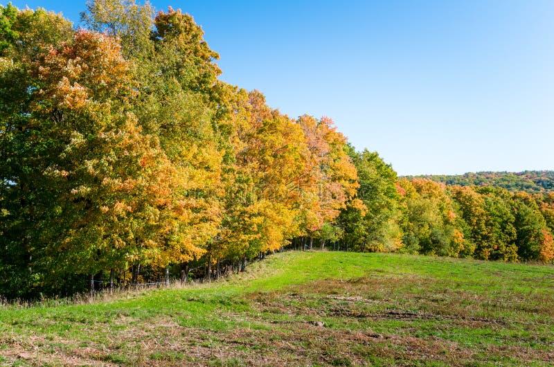 Деревья осени на краю поля стоковые фотографии rf