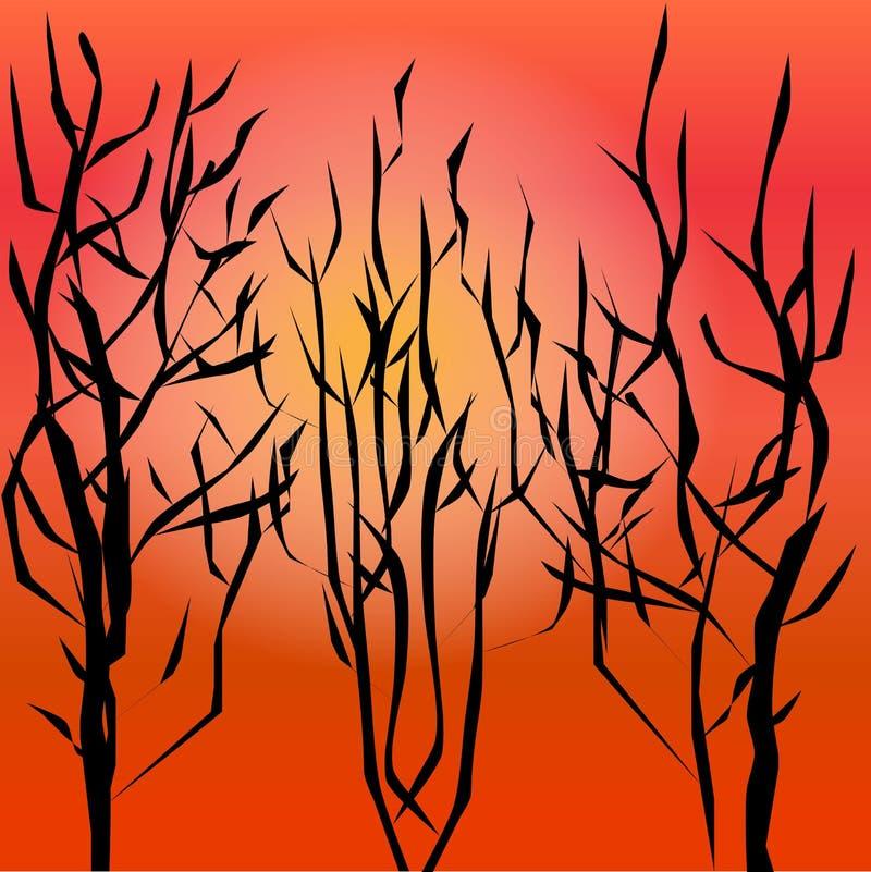 Деревья осени на солнце предпосылки горячем стоковые изображения