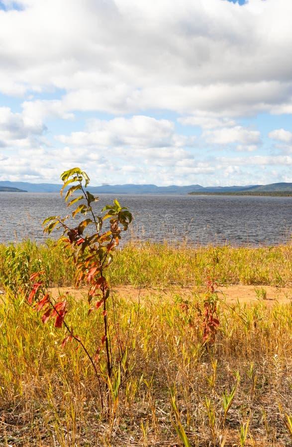 Деревья осени на nfdl следа озера олен стоковое фото